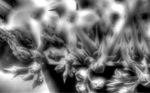 Estudio en Blanco y Negro 02